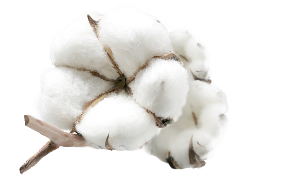 Egypt Cotton