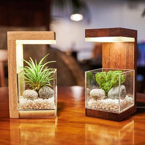 원목 플랜테리어 공기정화 식물 LED 무드등