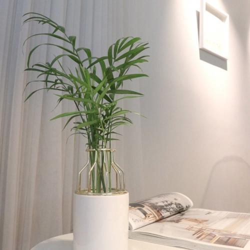 수경재배식물 테이블야자&도자기 화병 세트