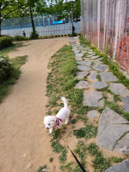 [추천] 서울에 몇 안되는 애견놀이터!