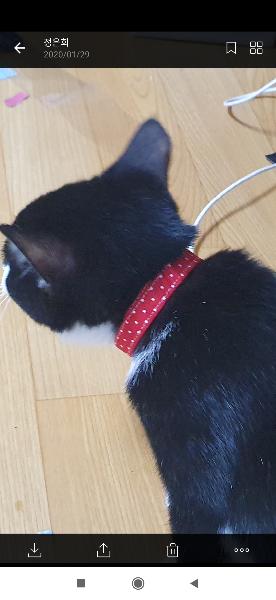 1. 고양이가 너무 자주뭅니다ㅠㅡㅠ\n근데 악의를 가지고무는지 놀아달라고 무는지 알수가없네요\n2. 목걸이 너무 꽉 한걸까요