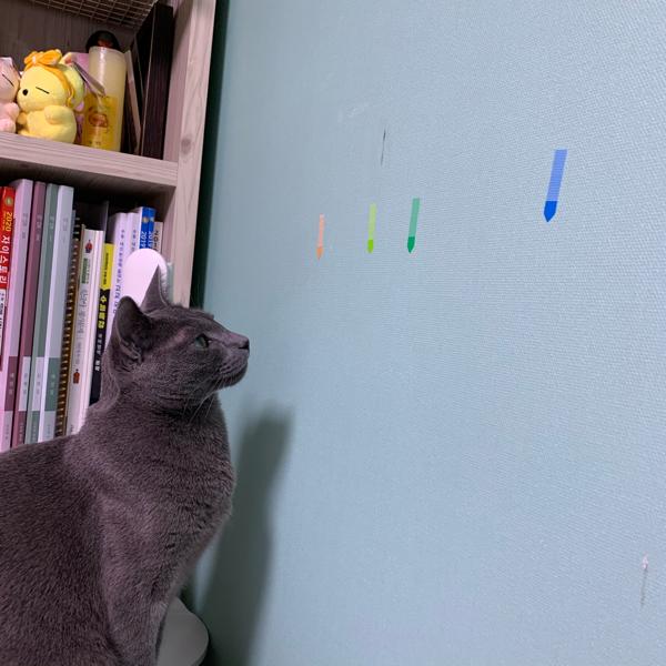 고양이가 사진 속 벽에 붙여진 비닐(?) 포스트잇을 씹다가 삼켰어요 입천장에 붙어있지 않은걸로 봐서 삼켜 넘긴 것 같은데 몸 속에 붙어있거나 그러진 않을까요..?똥으로 나올까요..?어떡하죠 너무 걱정이에요ㅠㅠㅠㅠ
