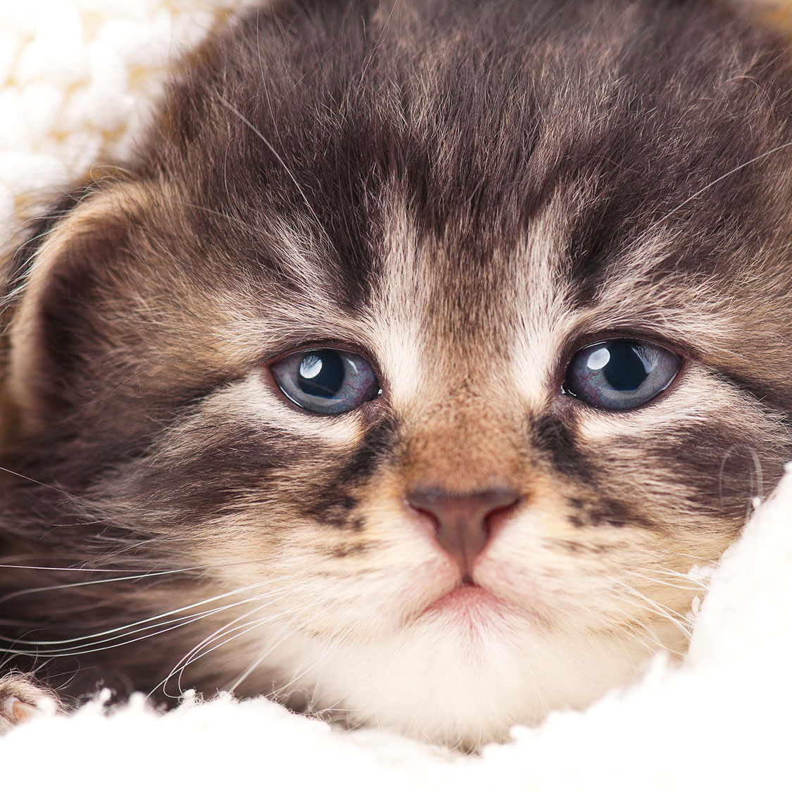 고양이, 눈물 흘리는 이유