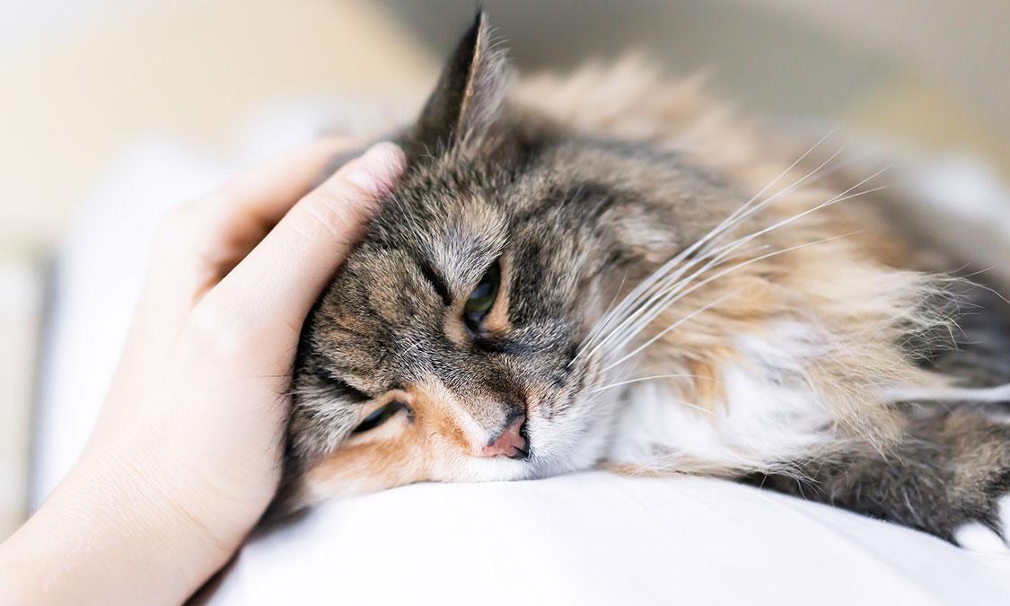 아플때 보내는 고양이 신호