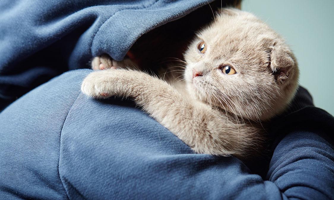 고양이도 관절염에 걸릴까?