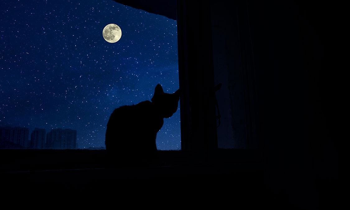 고양이가 보는 세상