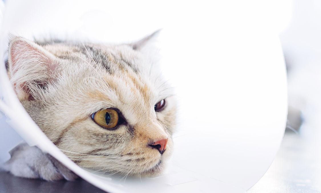 고양이 스프레이하는 이유