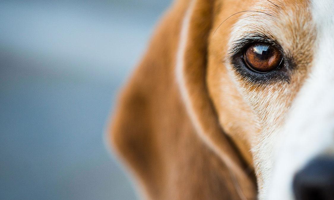 강아지가 우는 이유는?