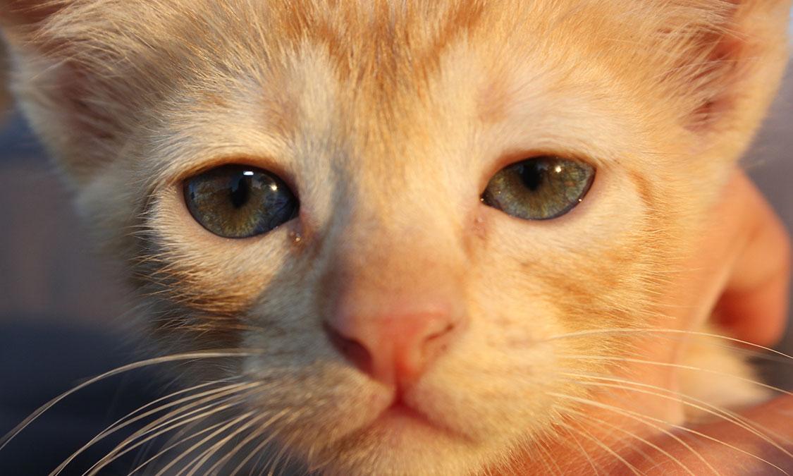 고양이 코가 건조해요