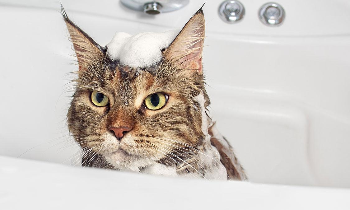 고양이 목욕 주기