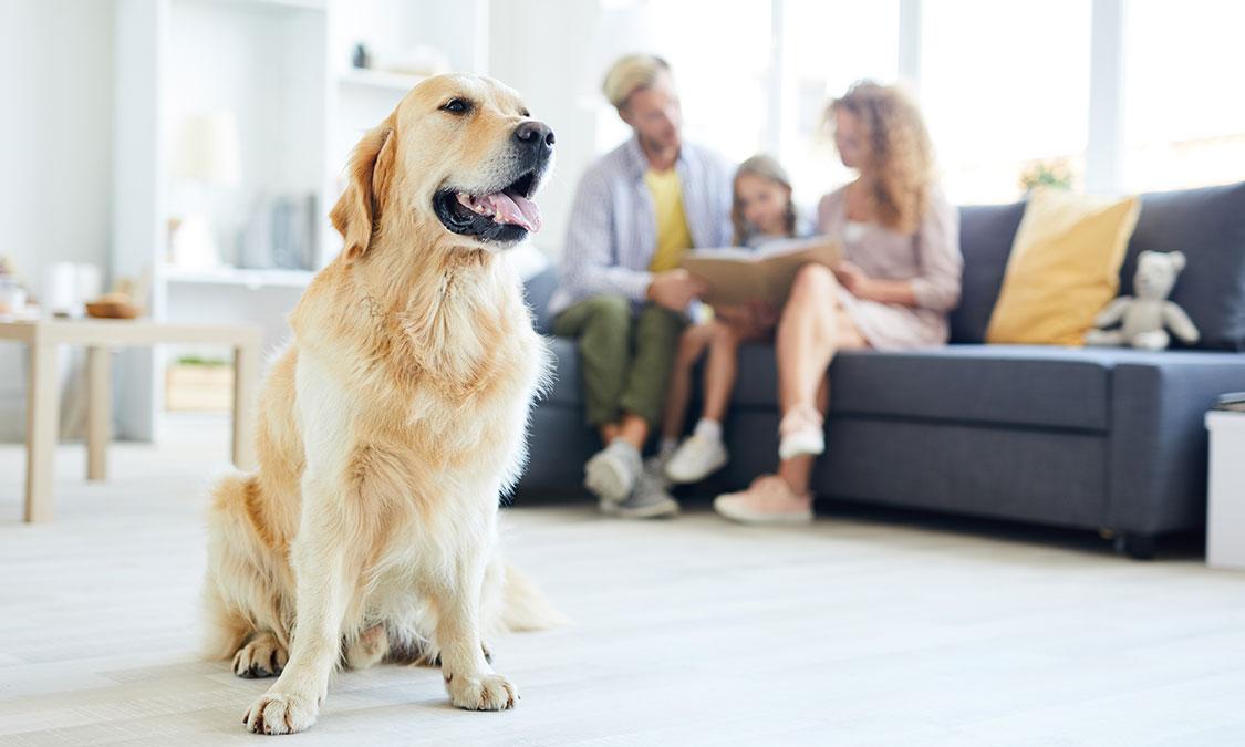 강아지랑 친해지는 법!