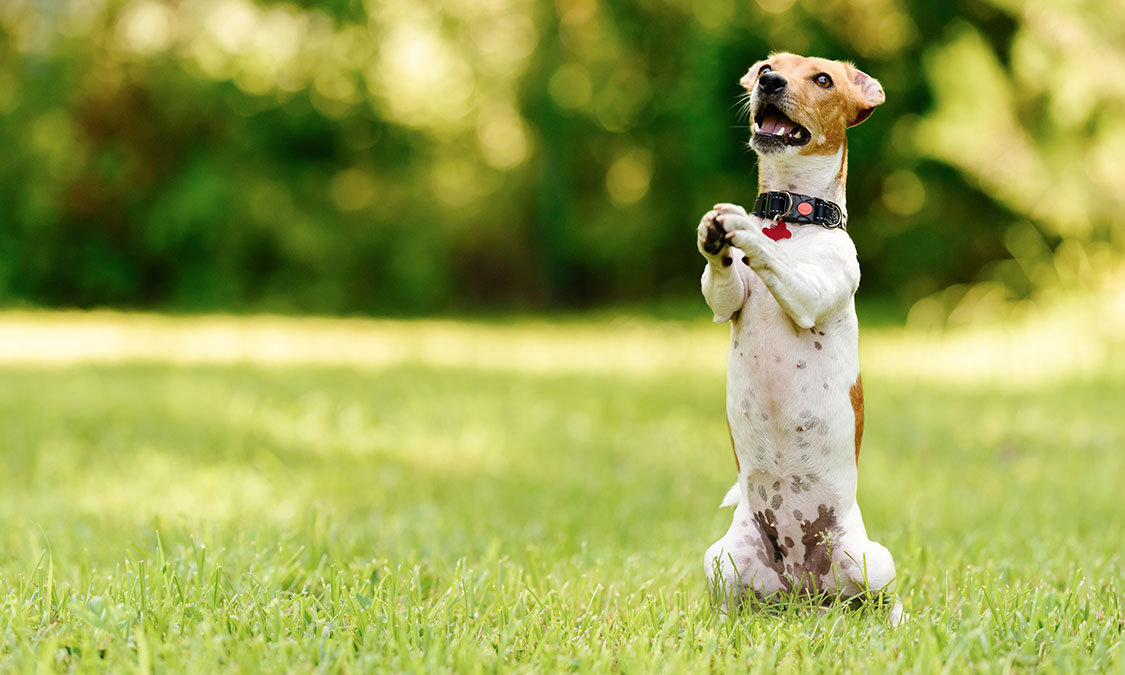 강아지는 몸으로 말해요!