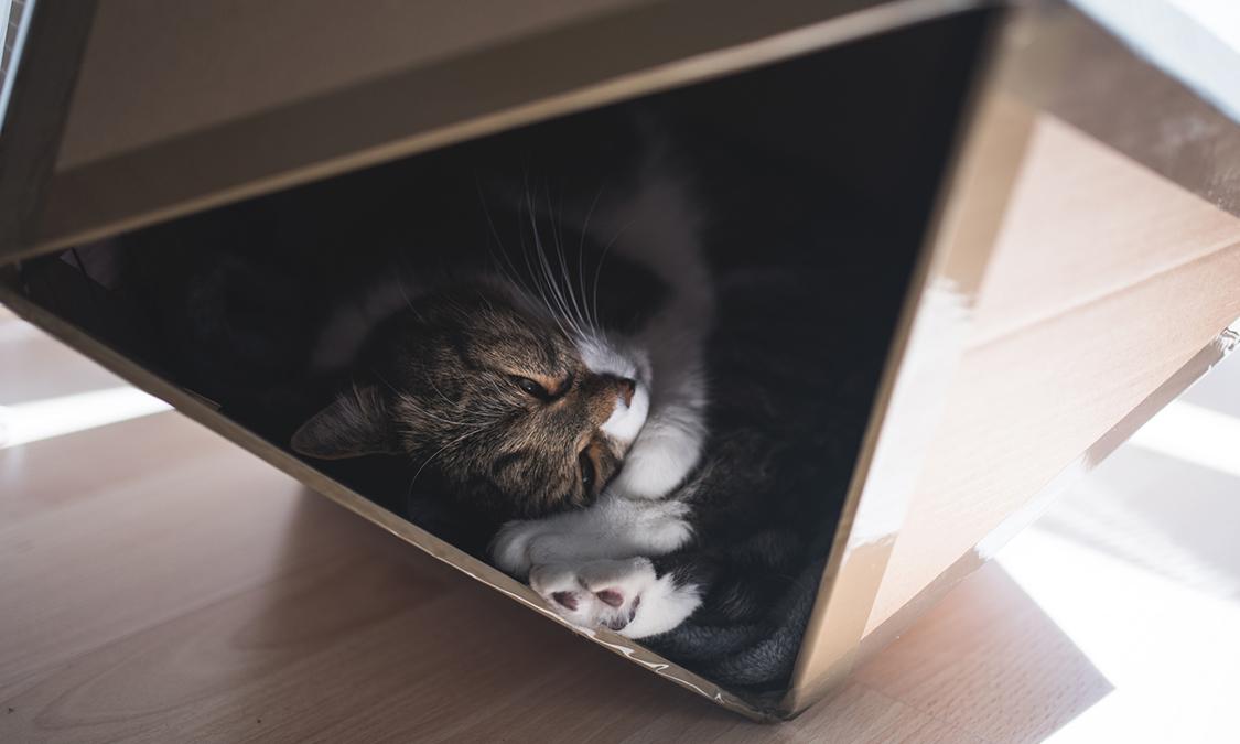 고양이가 많이자는 이유