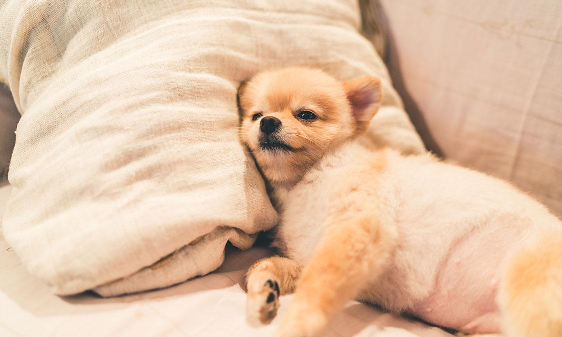 같이 자면 서열이 낮아질까?