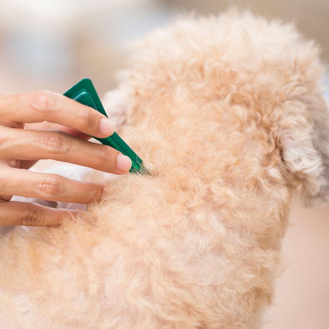 강아지 진드기 예방법!