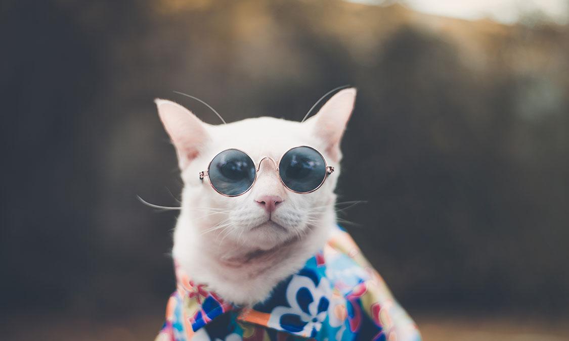 고양이도 더위를 느낄까?