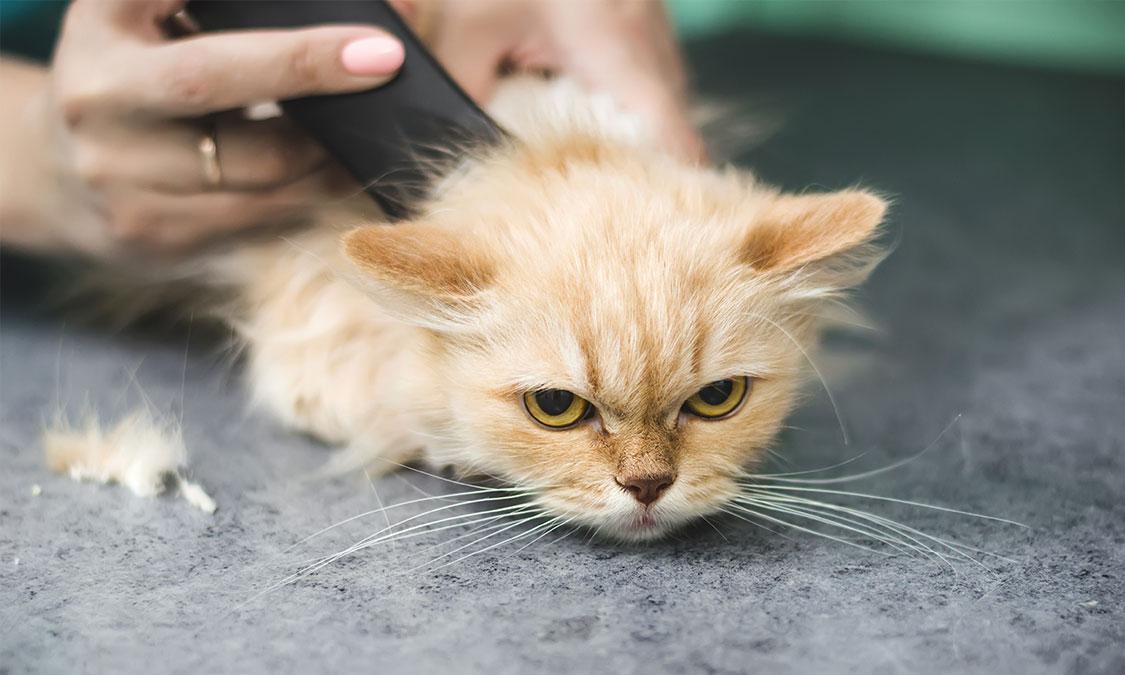 고양이 미용, 괜찮을까?