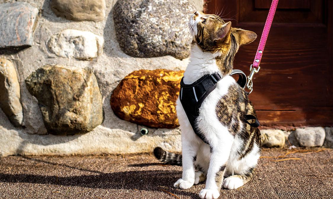 고양이도 산책을 시키면 좋을까요?