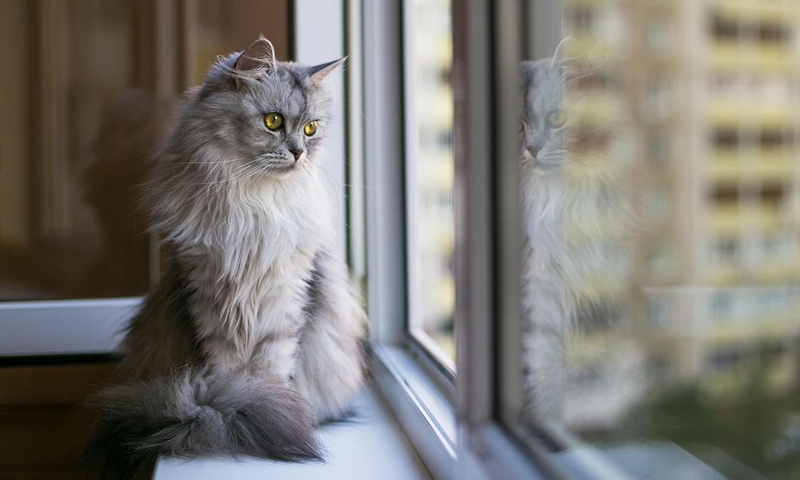고양이 두고 휴가가는 방법