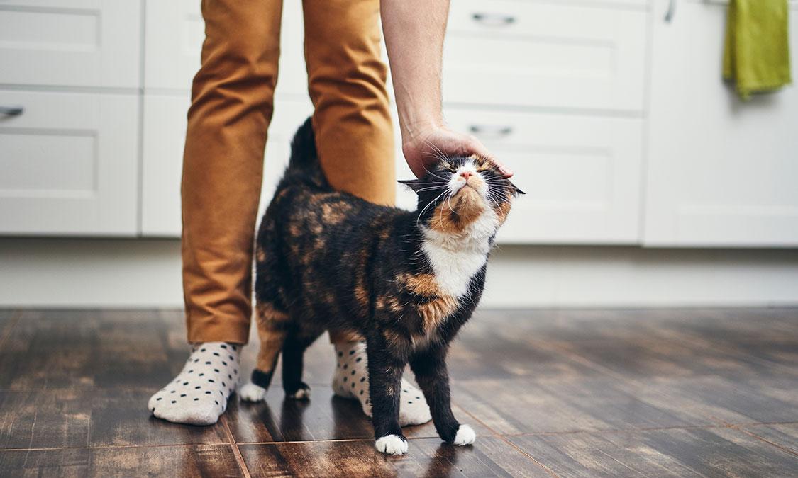 소리로 알 수 있는 고양이 기분상태!