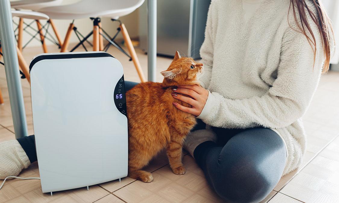 고양이 피부병 퇴치하기!