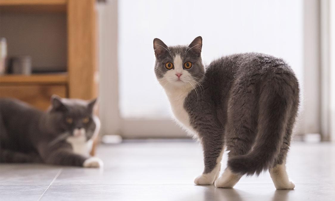 고양이 꼬리로 보는 기분 상태!