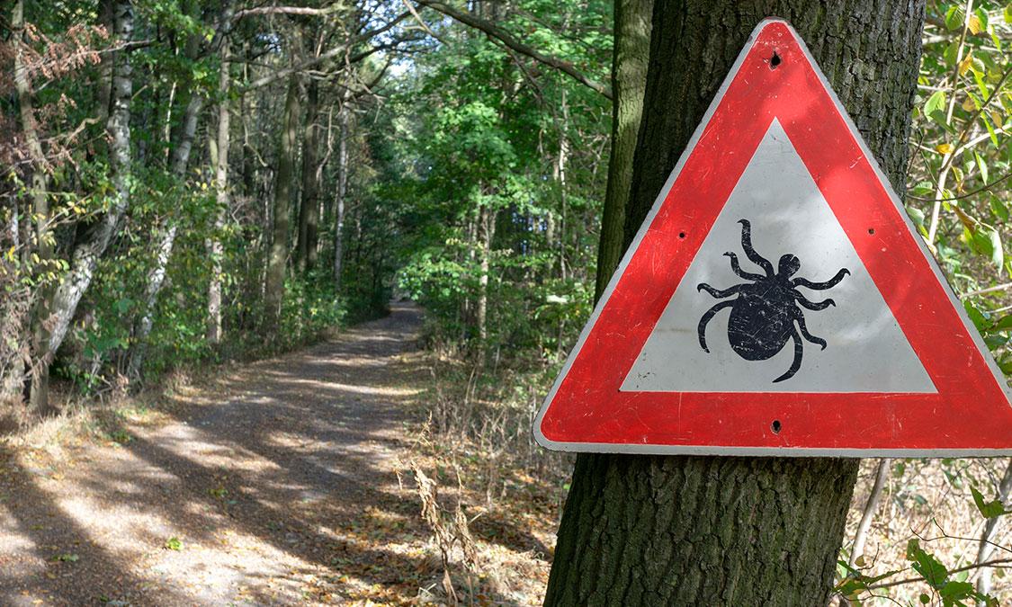 강아지 산책시 주의해야할 이것!