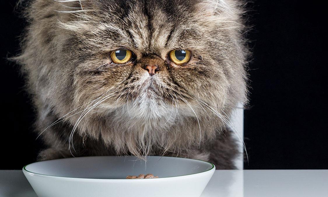 건강한 고양이가 꼭 먹어야 할 이것!