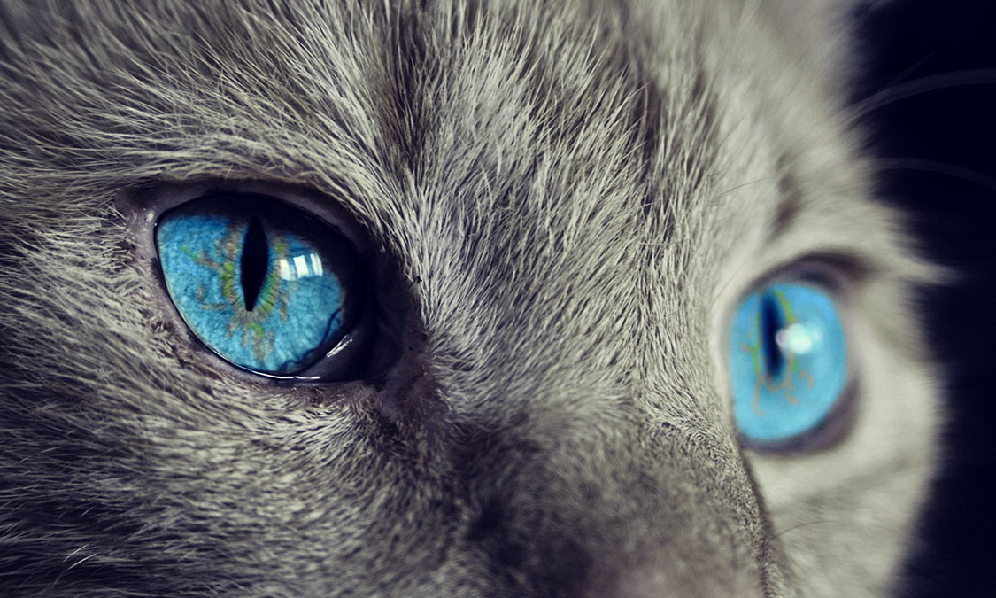 고양이 눈에 관한 6가지 비밀