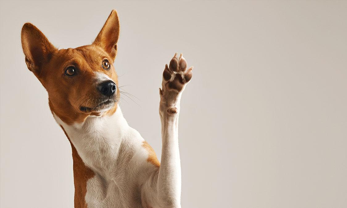 강아지의 언어, 카밍시그널