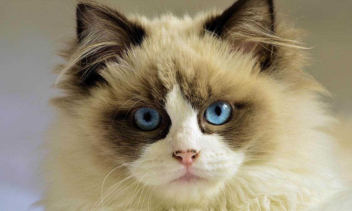 둘째 고양이 입양하실 거예요?