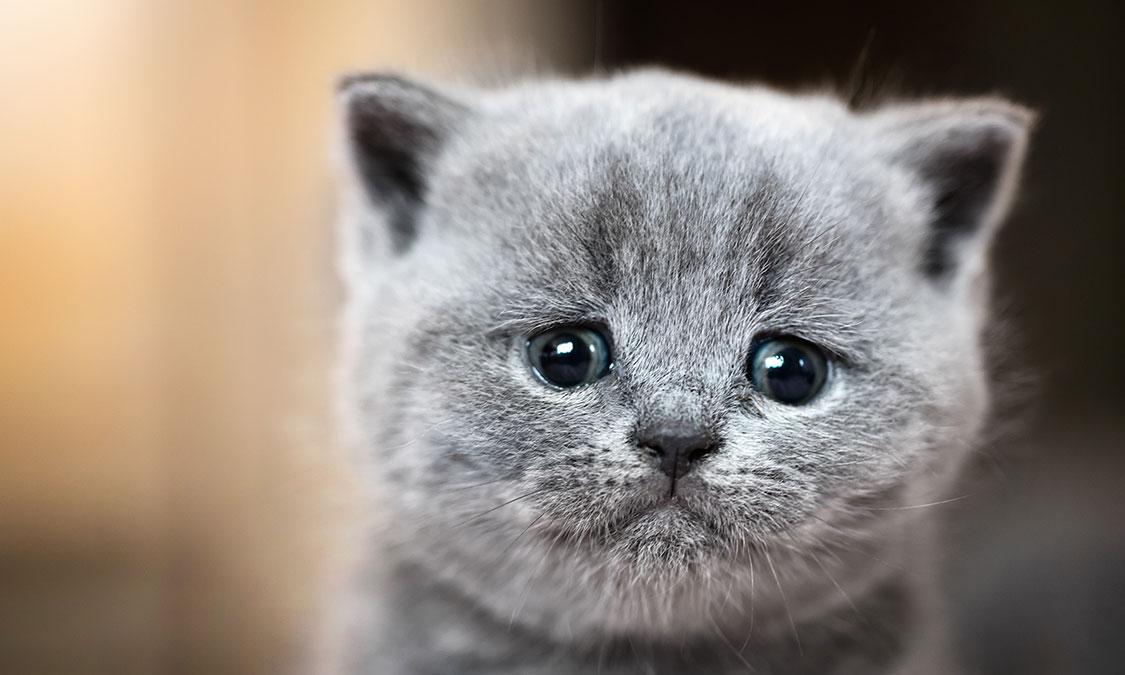 고양이 안구질환