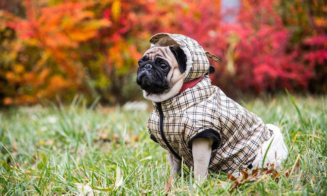 강아지 옷 입혀야 할까?