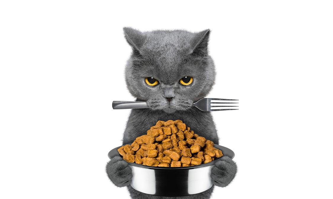뚱냥이의 다이어트 비법