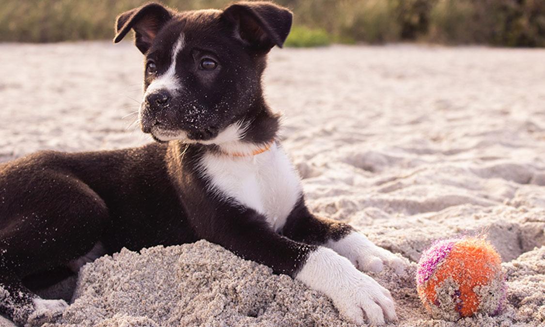 강아지 체온에 대한 9가지 사실