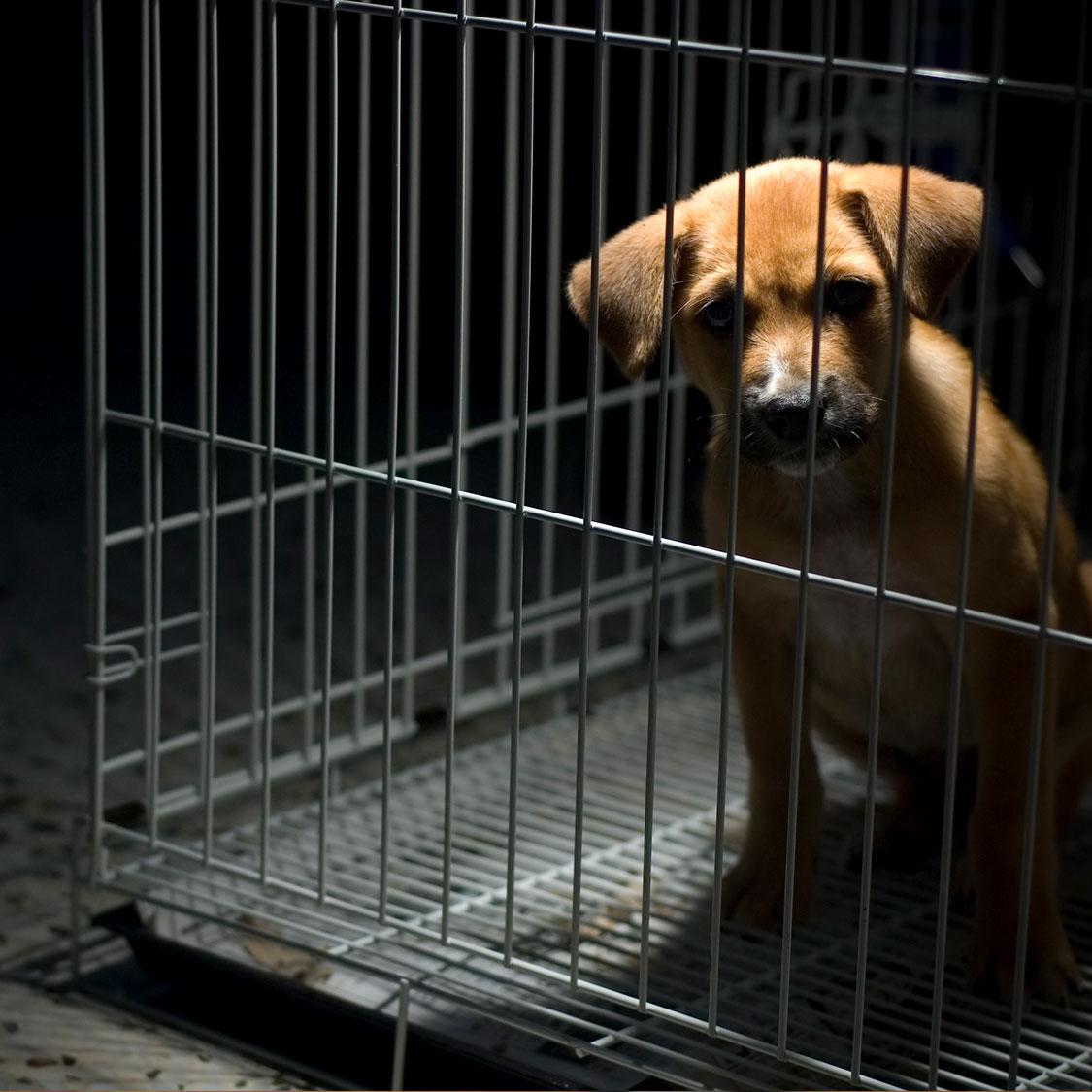 잃고 후회하지 않도록 동물등록 잊지마세요!