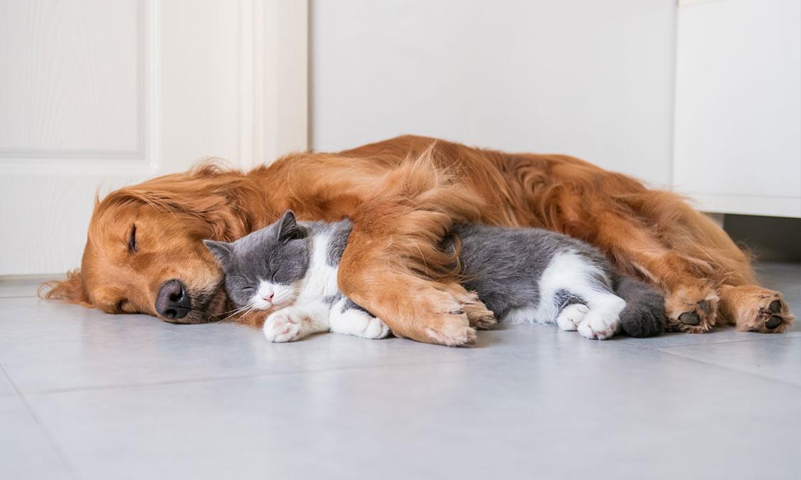 강아지, 고양이 얼음 먹어도 되나요? 차가운 대리석이 정말 좋은가요?