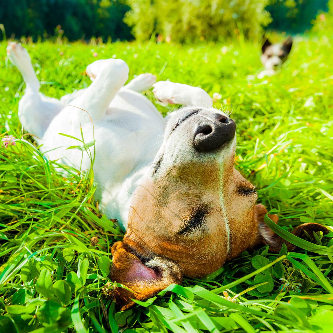 굿바이 썸머! 무더운 여름 지친 강아지를 위한 보양 간식!
