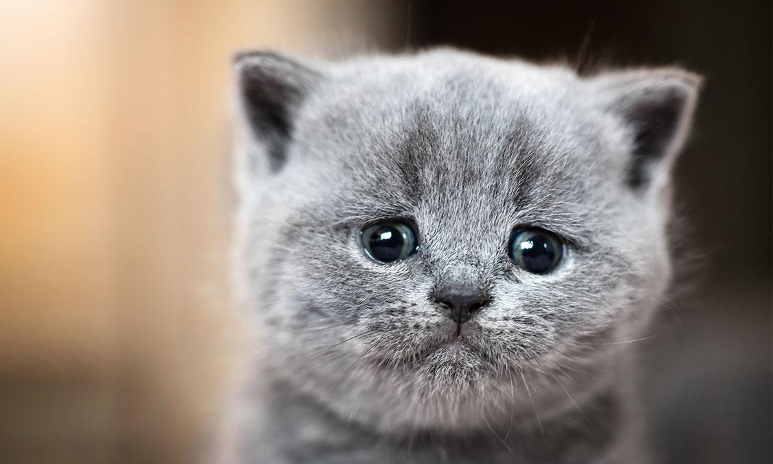 고양이가 눈곱이 끼는 이유?