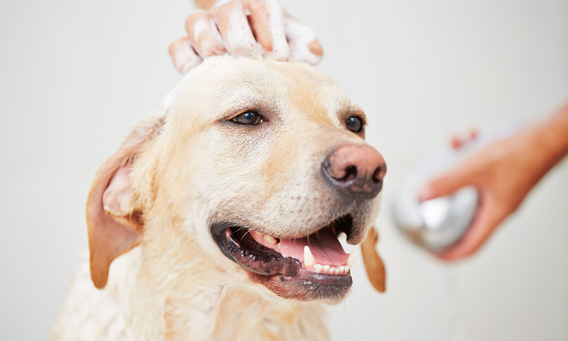 건조한 환절기, 아토피에 고통받는 강아지 피부관리는 어떻게?