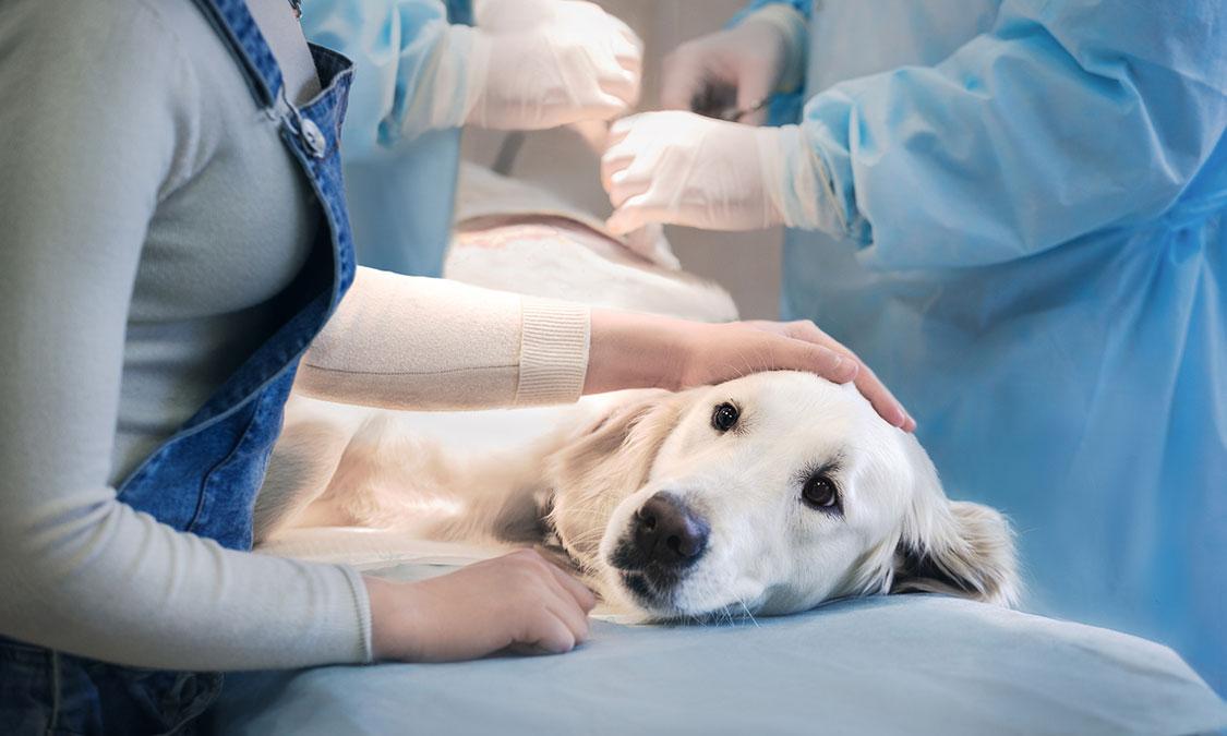 반려동물의 건강한 치아 관리가 중요한 이유는?