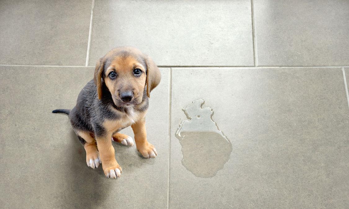 새끼 강아지를 키울 때 주의해야 할 사항