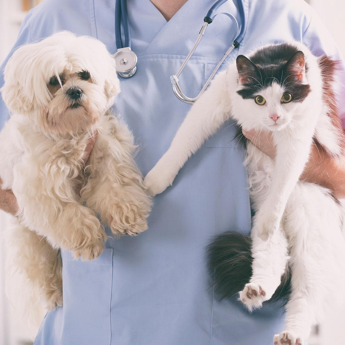 입양 후 첫 동물병원, 어떤 검사를 받을까?