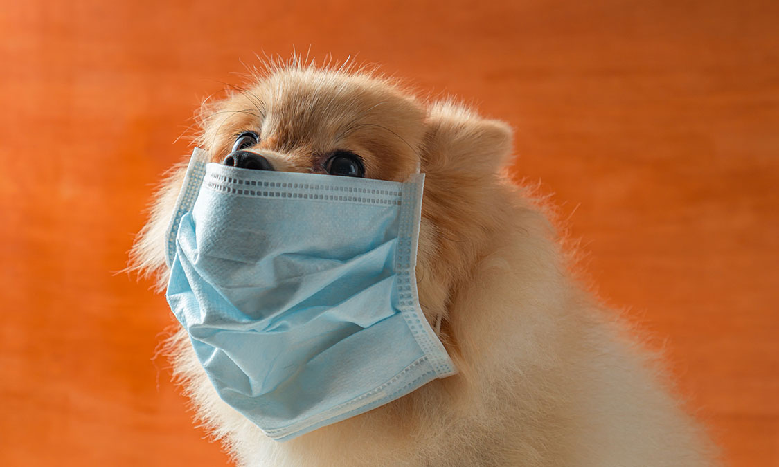 반려동물, 우한폐렴으로부터 안전할까?