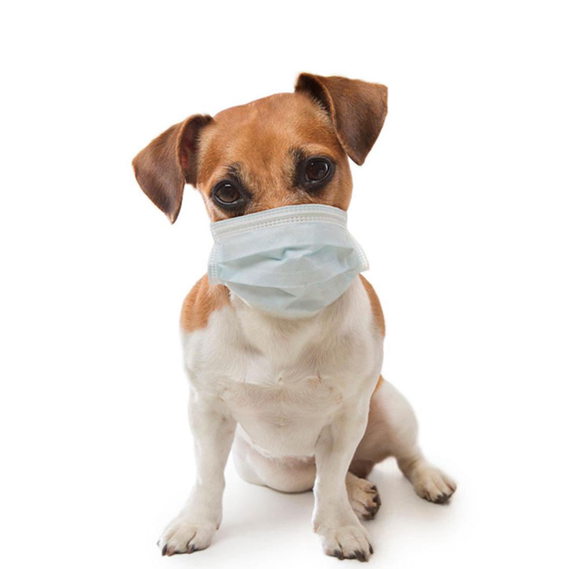 댕댕이 호흡기 질환 주의보