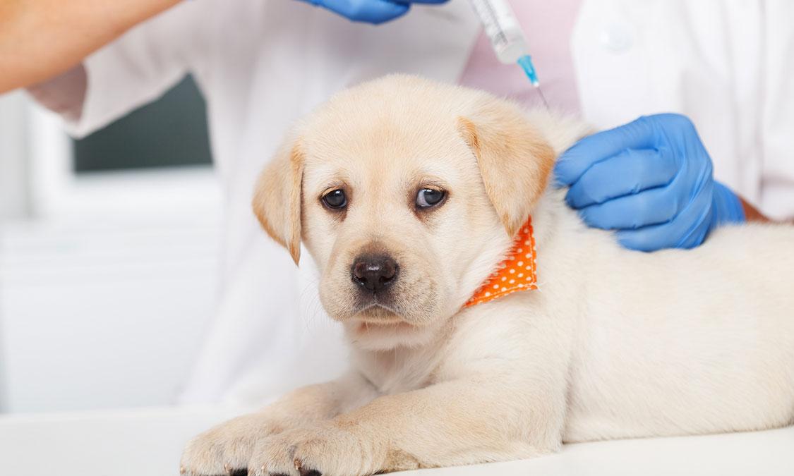 반려동물 건강검진, 꼭 해야할까요?