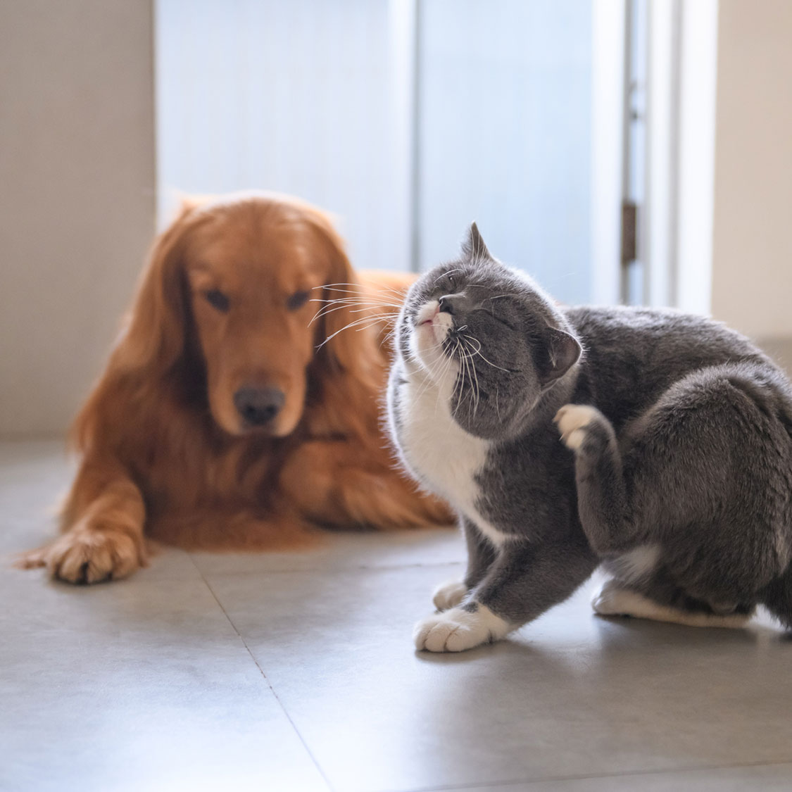 강아지 고양이가 피가 날 정도로 긁고 깨물어요! ㅠㅠ
