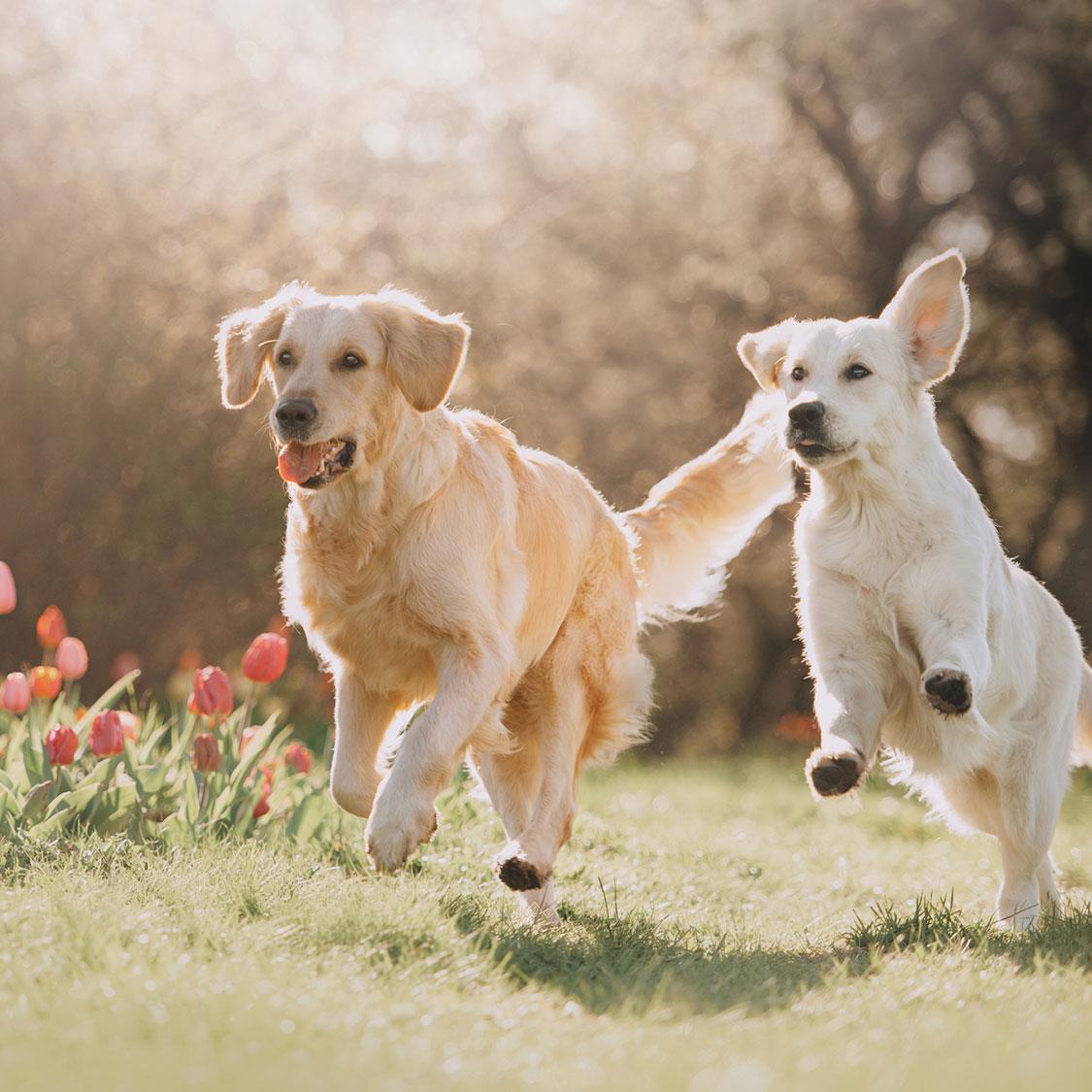 계절별 주의해야 하는 강아지의 질병과 예방법