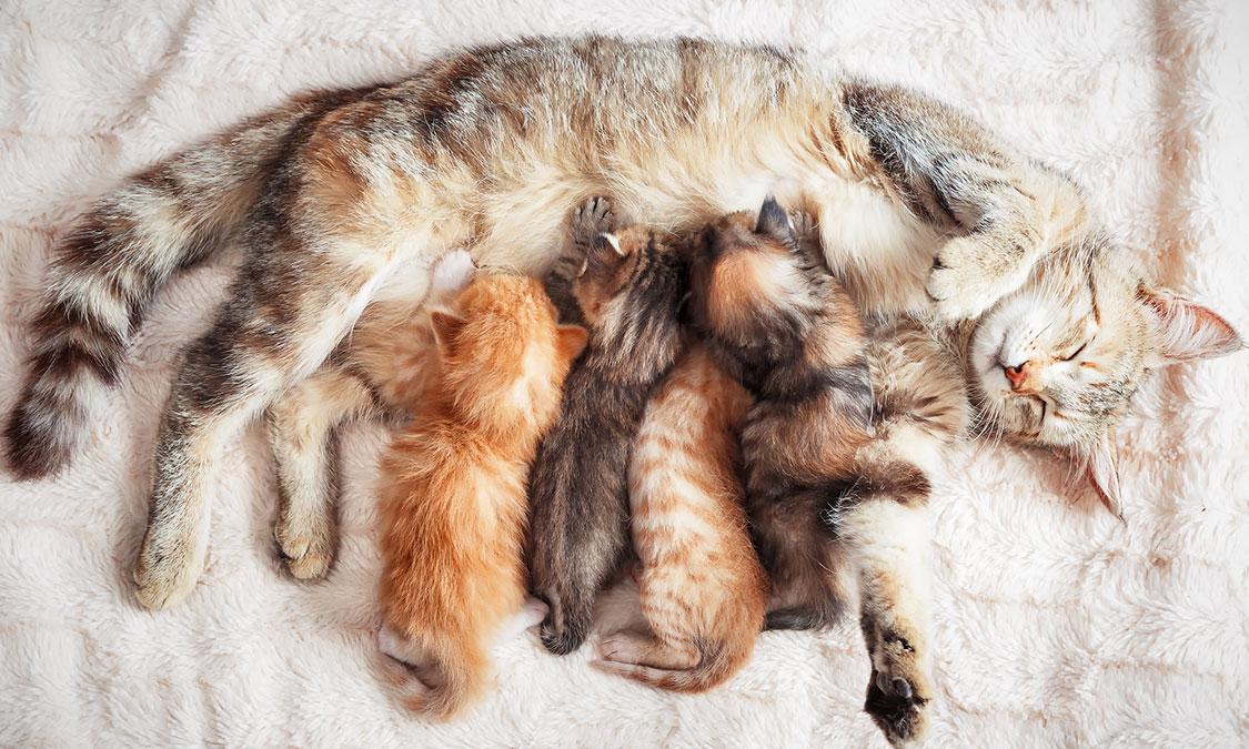 임신한 강아지, 고양이를 돌볼 때 주의할 점은?