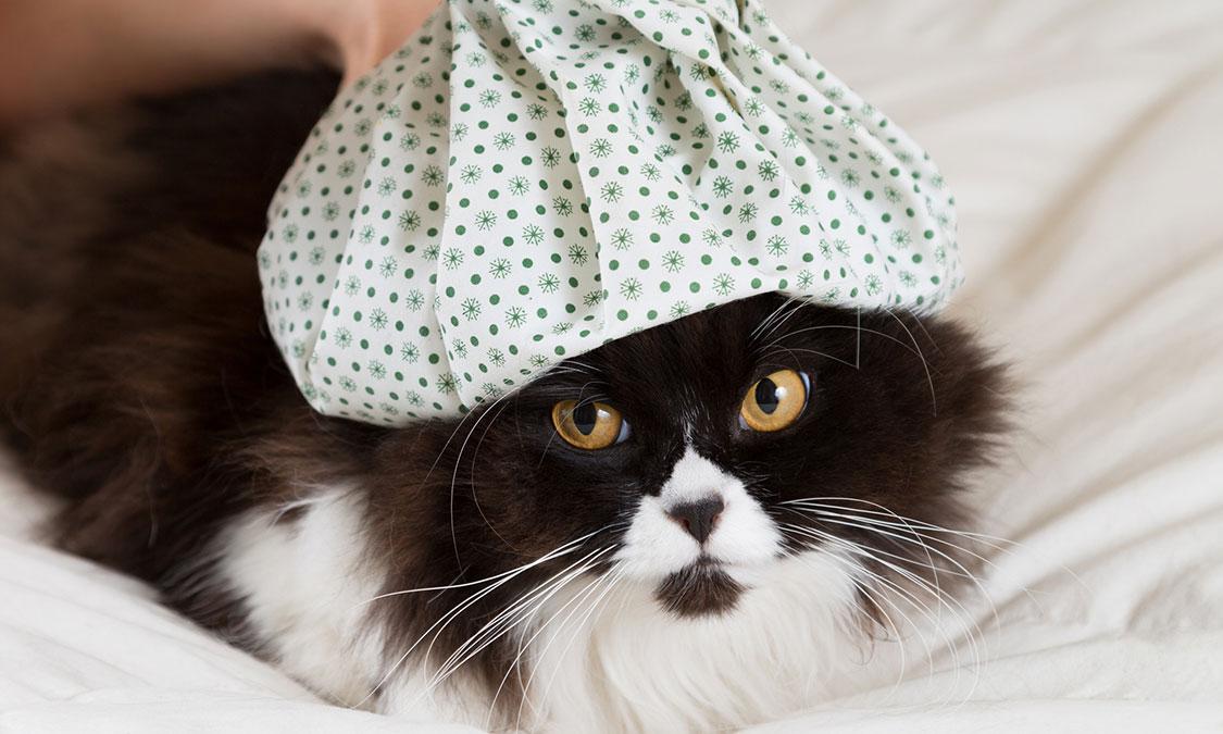 고양이 '허피스 바이러스'가 뭐예요?